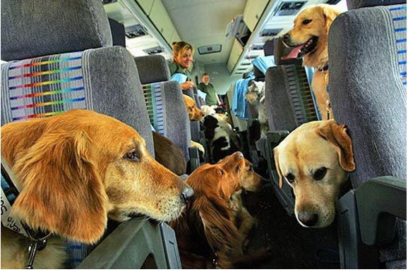 traveling with your petsaspx