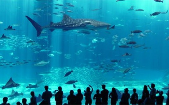 Istanbul Aquarium - Turkey Travel Guide